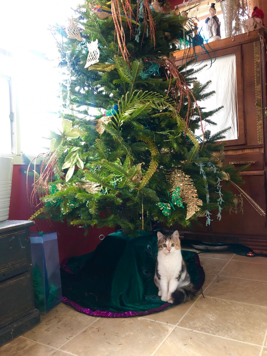 Kitten-under-the-Christmas-Tree
