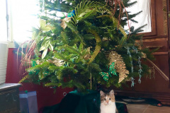 Kitten-under-the-Christmas-Tree